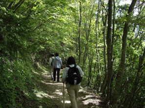 緑のトンネル、高越寺に行く