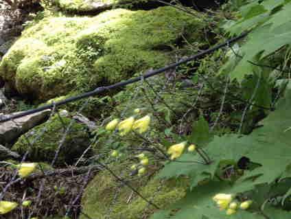 鹿対策のネットの向こうで咲いていた
