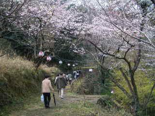 眉山中腹の桜道を歩く