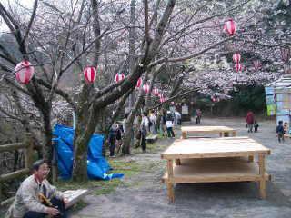 眉山中腹の桜